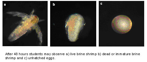 brine shrimp and ethanol alcohol Brine shrimp lethality assay (bsla) is an important method in the  however,  alcohol-based extracts (water-ethanol mixture and ethanol) of e.